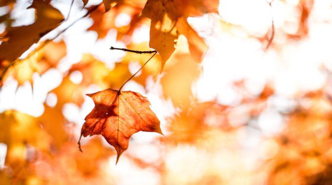 Herbstferien 2019